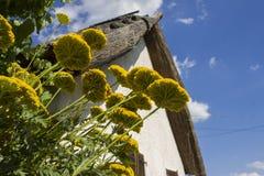 Fleurs jaunes (filipendulina d'Achillea) Images stock
