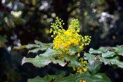 Fleurs jaunes fleurissantes au printemps Photographie stock libre de droits