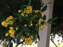 Fleurs jaunes lumineuses Image libre de droits
