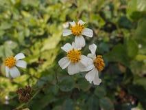 Fleurs jaunes lumineuses Photos libres de droits