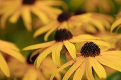 Fleurs jaunes multiples Photos libres de droits