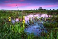 Fleurs jaunes par le lac au coucher du soleil dramatique Images stock