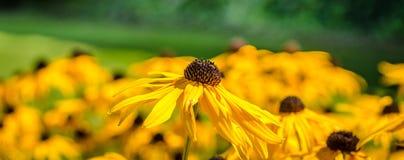 Fleurs jaunes pendant l'été photographie stock