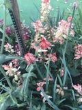 Fleurs jaunes pourpres blanches roses Photographie stock libre de droits
