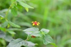 Fleurs jaunes rouges photographie stock libre de droits