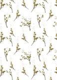 Fleurs jaunes sèches sur un fond blanc Images stock