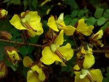 Fleurs jaunes sauvages Image stock