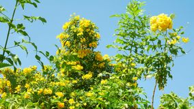 Fleurs jaunes sur le fond vert d'arbres banque de vidéos