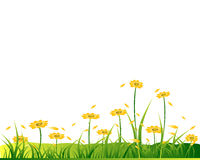 Fleurs jaunes sur le glassland Photos stock