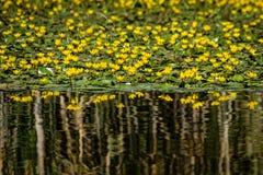 Fleurs jaunes sur le lac Photos stock