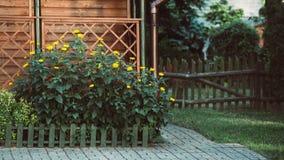 Fleurs jaunes sur le parterre dans le jardin photographie stock