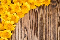 Fleurs jaunes sur un fond en bois Images stock