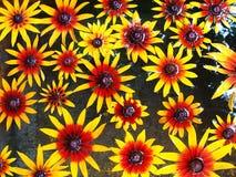 Fleurs jaunes sur une eau Photos stock