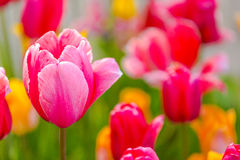 Fleurs - journée de printemps dans le jardin botanique Photographie stock libre de droits