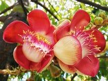 Fleurs jumelles Photographie stock libre de droits