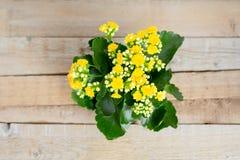 Fleurs Kalanchoe jaune sur un fond en bois dans le pot de fleur images libres de droits