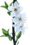 Fleurs à la première source Photographie stock