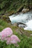 Fleurs le long de la rive Images stock