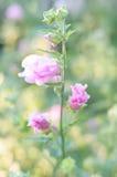 Fleurs lilas dans le jardin Photos libres de droits
