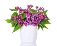Fleurs lilas dans un vase blanc et d'isolement Photos libres de droits