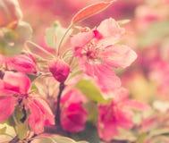 Fleurs lilas de beau ressort, image modifiée la tonalité photographie stock libre de droits