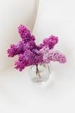 Fleurs lilas fraîches dans la fin en verre de vase d'isolement sur le fond blanc Images stock