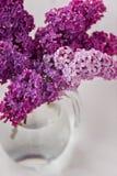 Fleurs lilas fraîches dans la fin en verre de vase d'isolement sur le fond blanc Image stock
