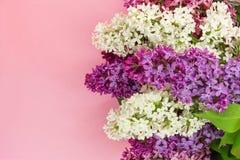 Fleurs lilas fraîches sur le fond rose doux Place pour le texte photo libre de droits