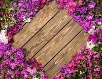 Fleurs lilas sur le fond en bois Photos libres de droits