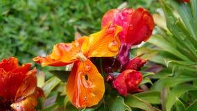 Fleurs lumineuses avec des baisses pendant le matin Images libres de droits