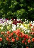 Fleurs lumineuses d'été photo libre de droits
