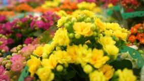 Fleurs lumineuses dans des pots clips vidéos
