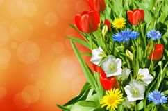 Fleurs lumineuses de jardin photos stock