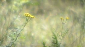 Fleurs lumineuses clips vidéos