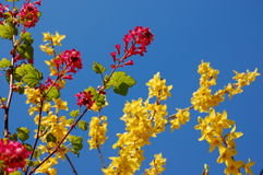 Fleurs lumineuses et ciel bleu Images libres de droits
