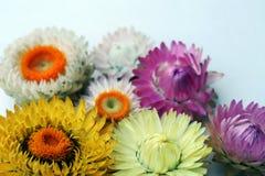 Fleurs lumineuses sur un fond clair photos stock