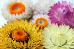 Fleurs lumineuses sur un fond clair photographie stock