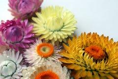 Fleurs lumineuses sur un fond clair images libres de droits
