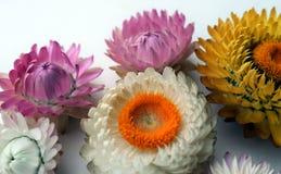 Fleurs lumineuses sur un fond clair image stock