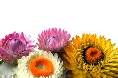 Fleurs lumineuses sur un fond clair photo libre de droits