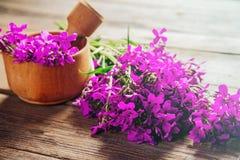 Fleurs médicinales de saule-herbe en mortier Photo stock