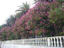 Fleurs méditerranéennes Images libres de droits