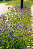 Fleurs mélangées d'été sur la rue Image stock