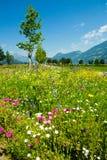 Fleurs mélangées d'été sur la rue Image libre de droits