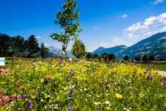 Fleurs mélangées d'été sur la rue Photographie stock libre de droits