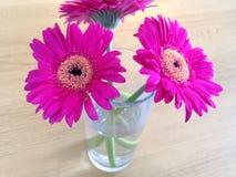 Fleurs magenta Photographie stock libre de droits