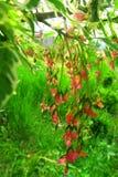 Fleurs magiques Image stock