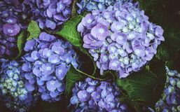 Fleurs magiques rêveuses avec les feuilles foncées Image libre de droits