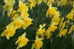 Fleurs magnifiques avec une couleur animée jaune image libre de droits