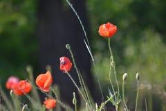 Fleurs Maquis Photos stock